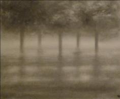 Misty Trees
