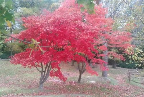Redtree