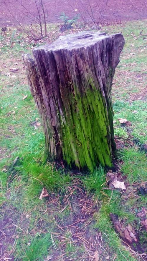 Treestump_1
